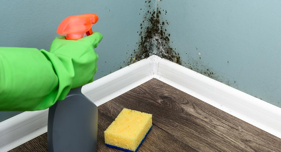روش تمیز کردن دیوار گچی از دوده